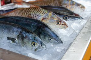peces frescos