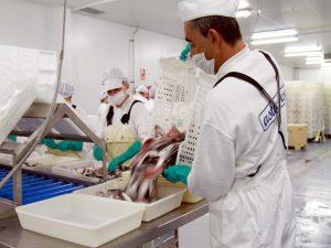 pescado instalaciones asturpesca