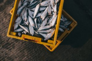 pescado fresco asturias