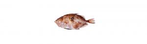 san martin pescado fresco asturias