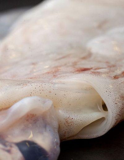 calamares asturias ifs