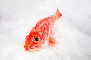 gallineta pescado asturias