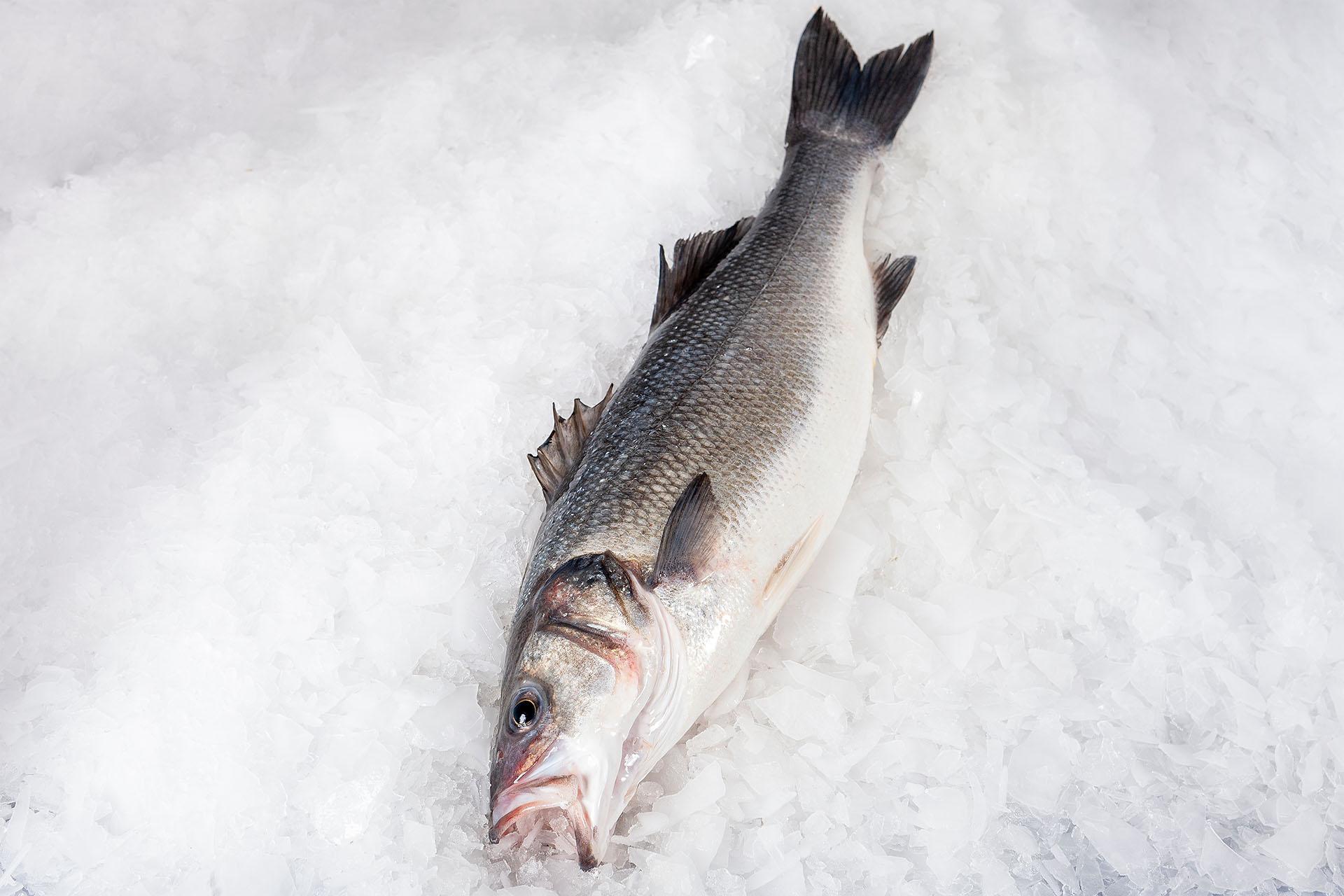 Frozen sea bass
