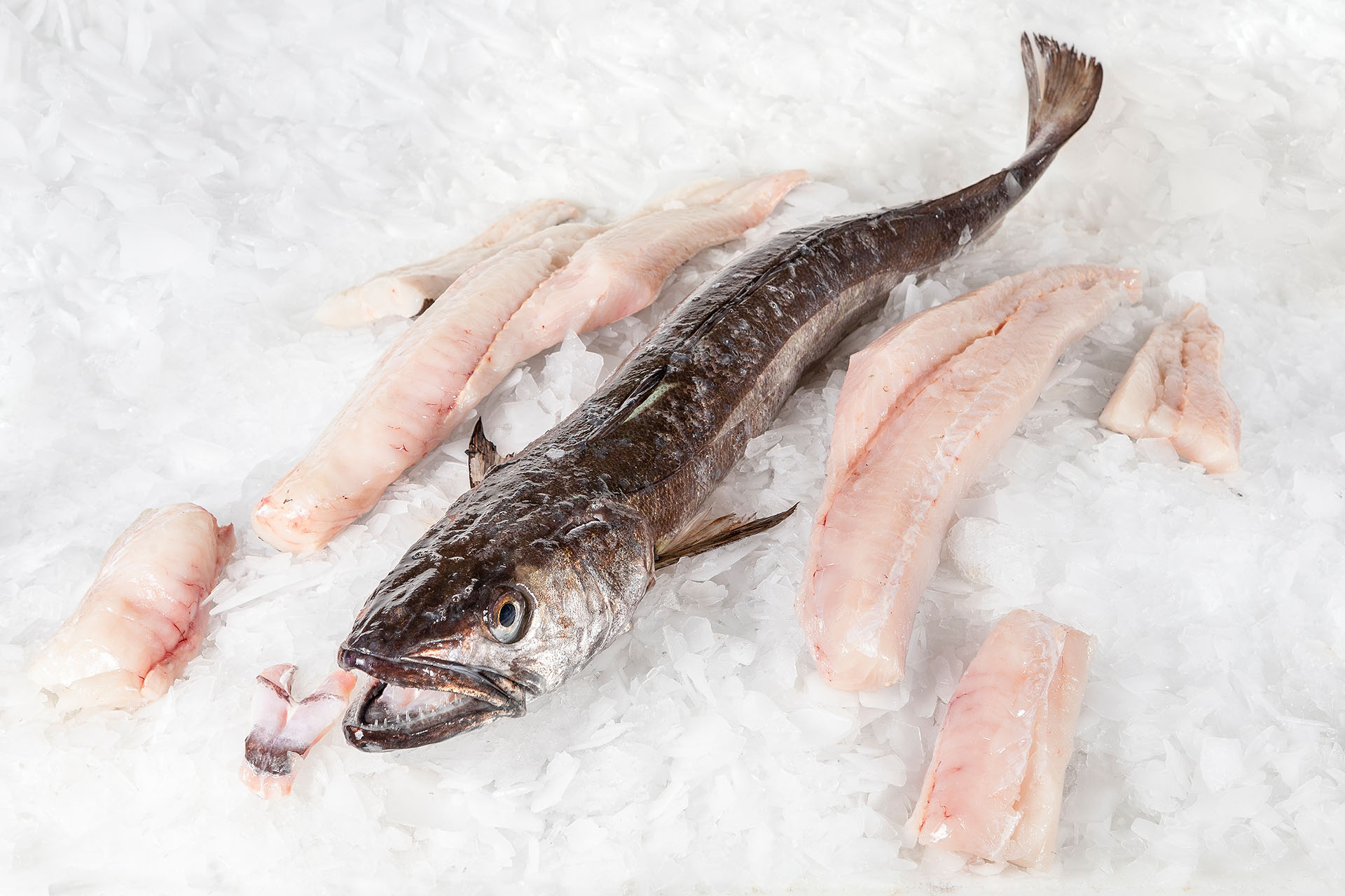 filleted fish distributor