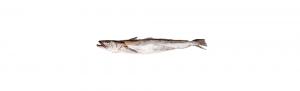 merluza pescado españa