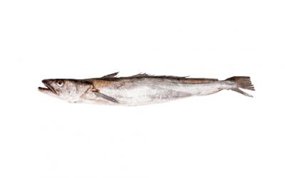 Filet de merlu surgelé (Merluccius merluccius)