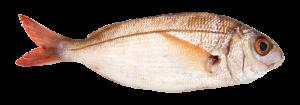 Aligote pescado fresco asturpesca