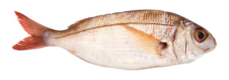 Axillary sea bream