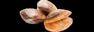 Almejas atlantico