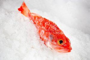gallineta pescado fresco