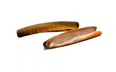 Razor clams (Ensis ensis/Ensis minor)