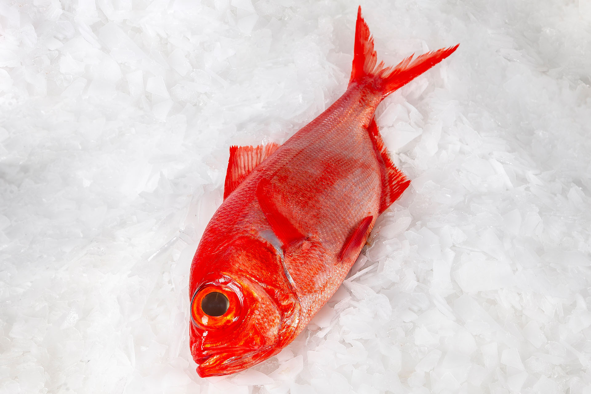 Alfonsino fish