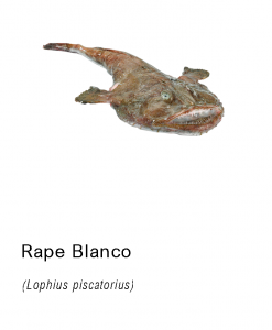 rape blanco fresco