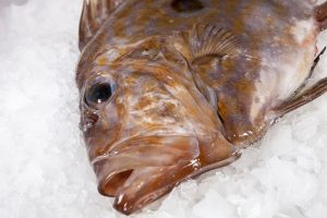 san pedro pescado asturpesca