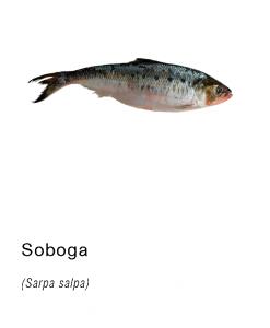 soboga pescado fresco asturpesca