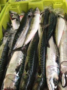 verdel pescado fresco astupesca