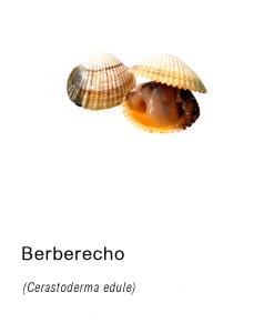Berberecho frescos asturpesca
