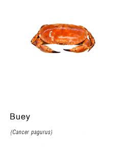 buey marisco fresco