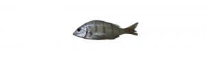herrera certificado calidad pescado