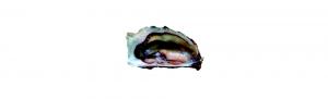 ostras certificado calidad