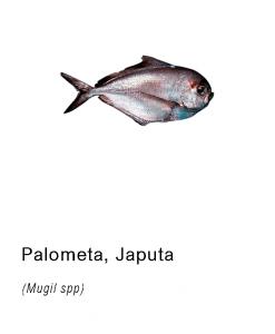 palometa japuta pescado fresco