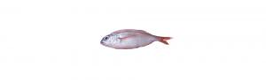 pancheta pescado calidad