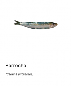 parrocha pescado fresco