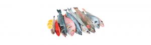 pescado blanco distribucion asturias