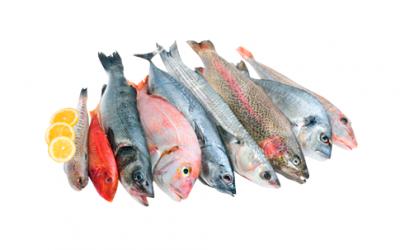 White fish (Various species)