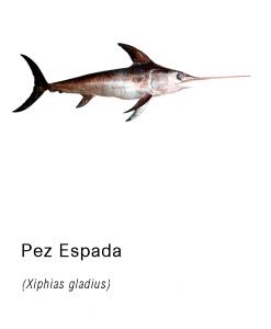 pez espada pescado fresco