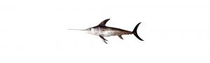 pez espada ifs