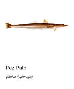 pez palo distribucion