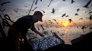 datos pesca fao