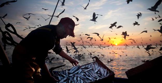 Informe de la FAO sobre los efectos de la Covid-19 en el sector de la pesca