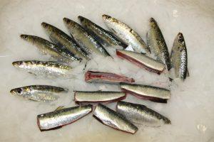 troncos de sardina