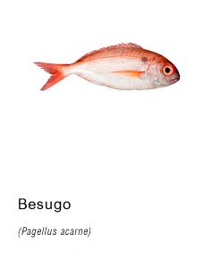 besugo fresco ifs