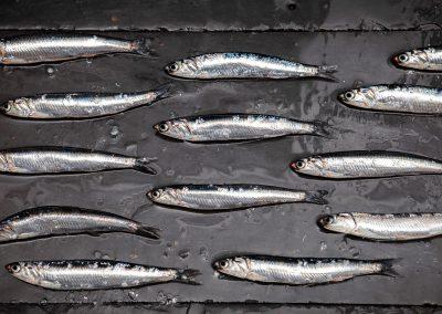 anchois blanc