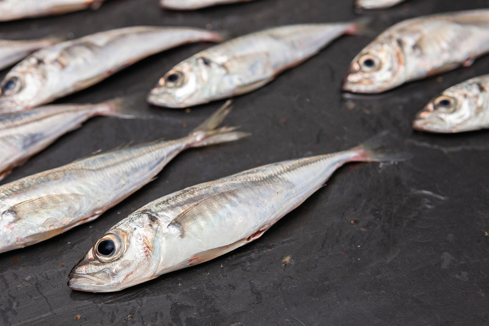 Atlantic horse mackerel fillet