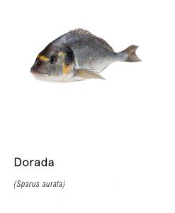 dorada pescado fresco