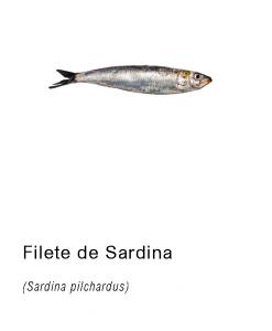 filete sardina asturpesca