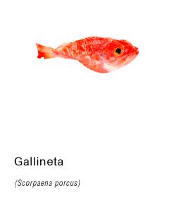 gallineta pescado fresco asturpesca
