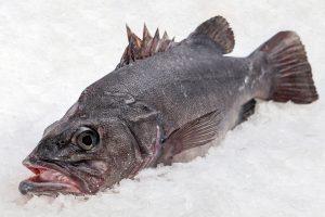 mero fresco pescado atlantico