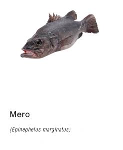 mero pescado fresco