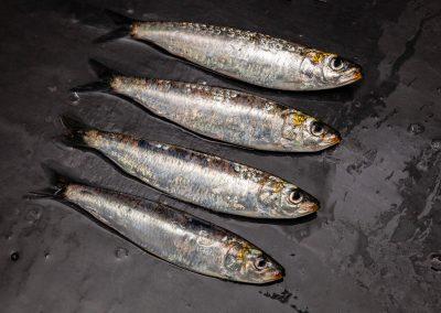 distribucion de sardinas asturpesca