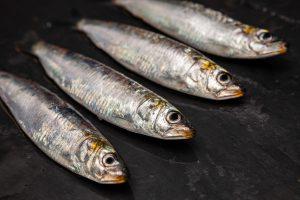 sardinas frescas atlantico