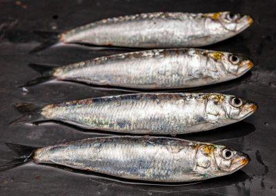 sardinas atlantico pescado msc
