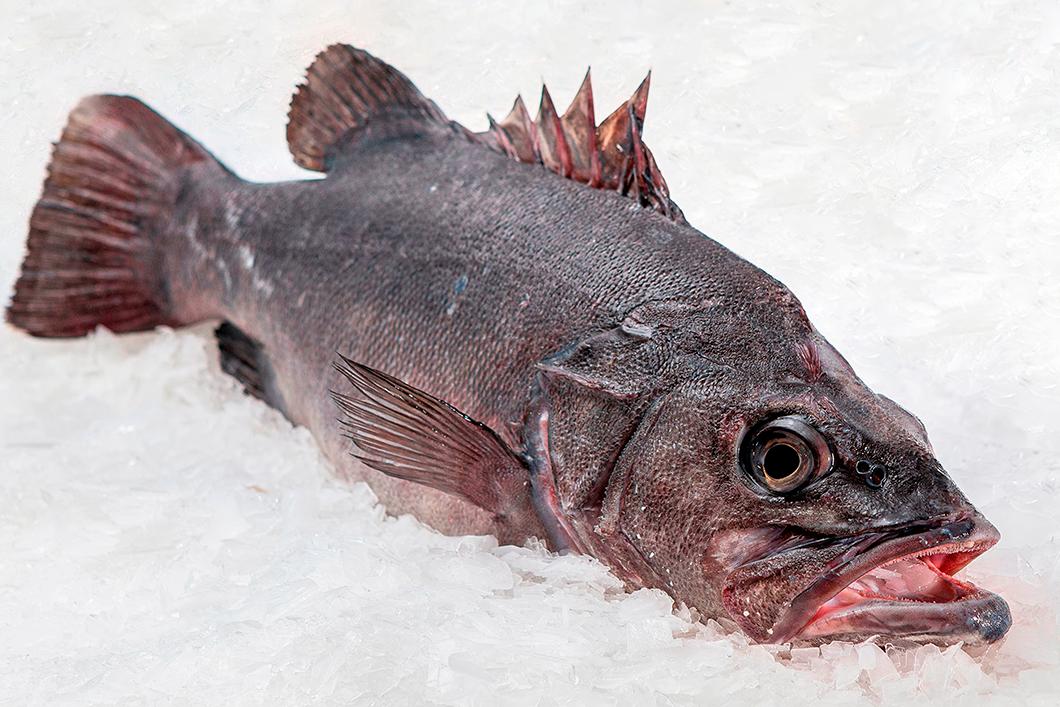 IFS Fish distributor