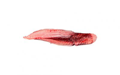 Tuna loin (Thunnus alalunga)