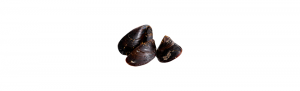 mejillones atlantico certificado calidad