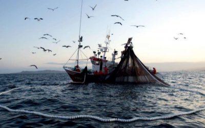 Les différentes qualités de poisson selon l'engin de pêche utilisé pour les capturer